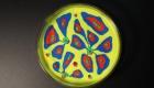 capsula petri 2
